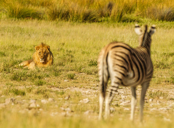 2019 Etosha National Park