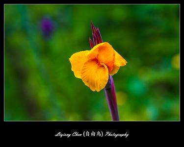Unknown flower-44
