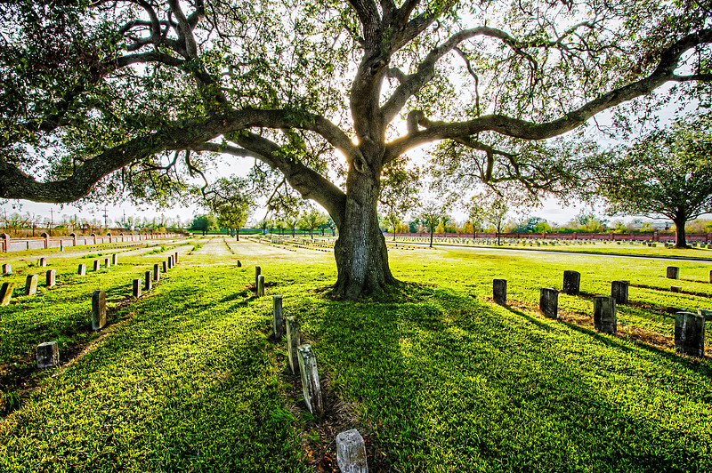 graveyard oak edit 2.jpg