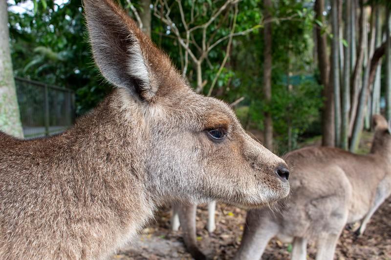 Australia_200.jpg