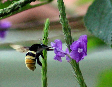 Bees  (6)