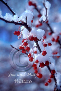 Winter_022