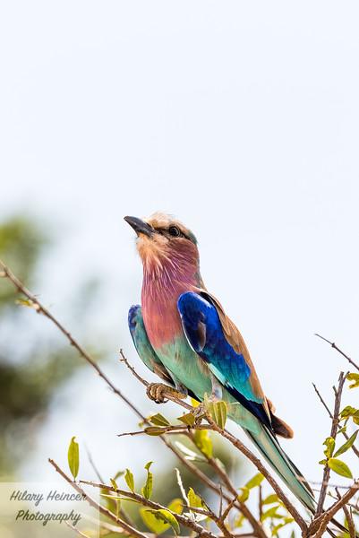 Kenya Wildlife-80.jpg