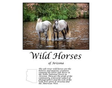 Where the Wild Ones are....Salt River Wild Horses