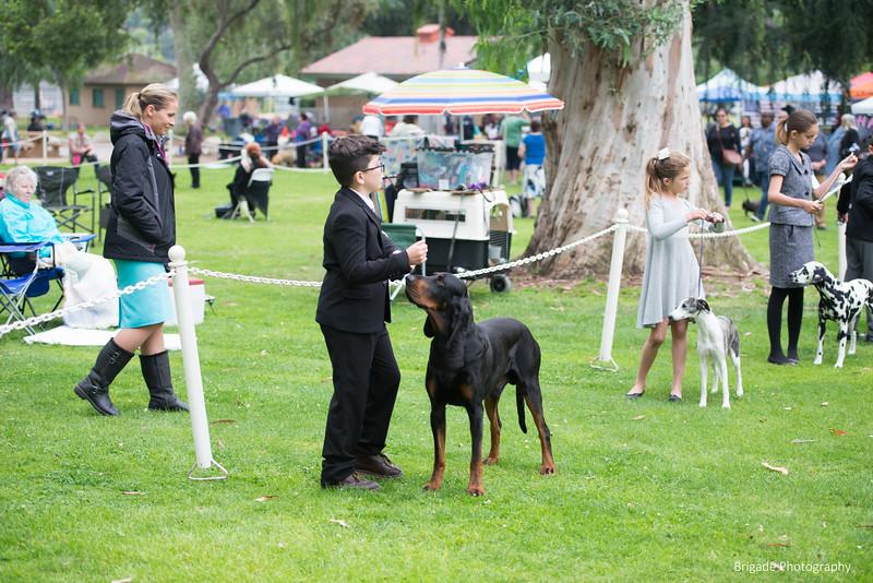 2019 Pasadena Kennel Club-8214.jpg