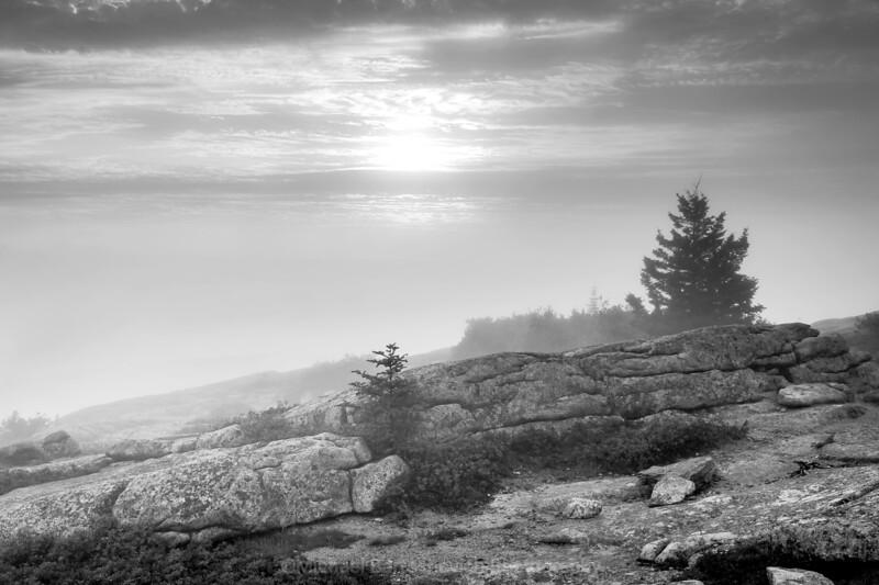 Acadia Batch 2-11.jpg