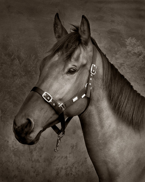 equine_photographers_parris_photography.jpg