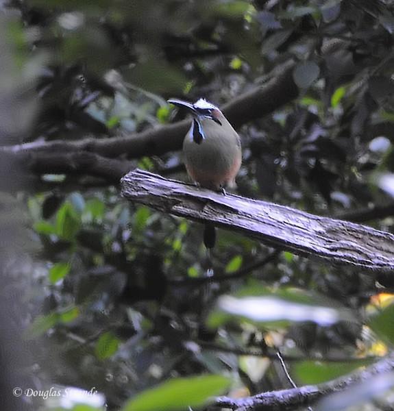 307-1738-Guanacaste-HardToSeeBird.jpg