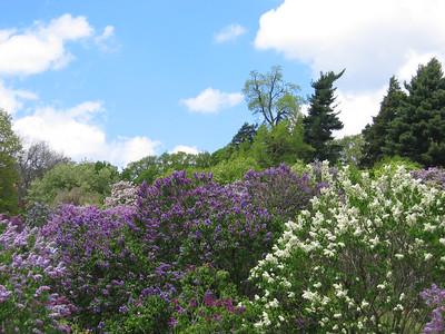 2006_05 Lilac Festival