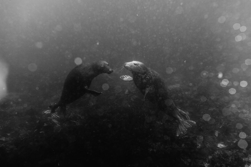 The Farne Islands-123.jpg