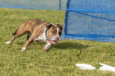 Swift Paws Coursing