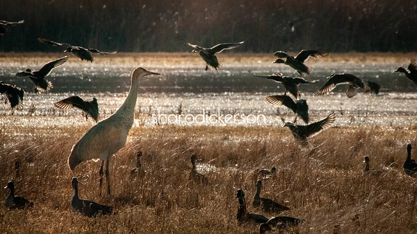 The Flight of the Birds