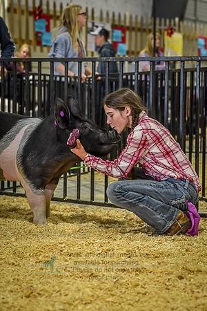4-H Swine