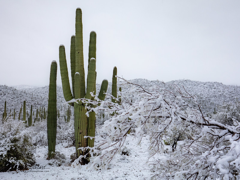 Saguaro East Snow 1-2-2019a 1-2-2019f-.jpg
