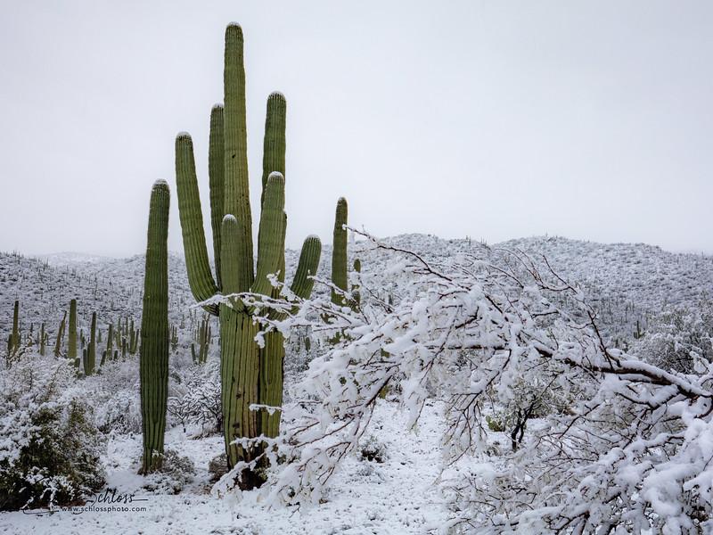 Saguaro East Snow 1-2-2019a 1-2-2019f-.jpg