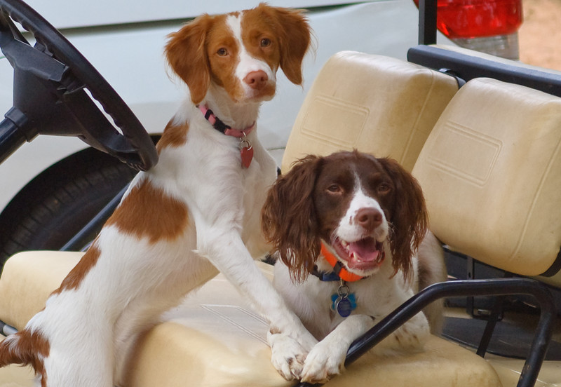 Scout and Abby-2045.jpg