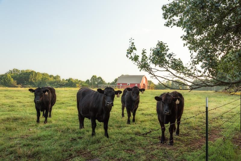 Belue Farms