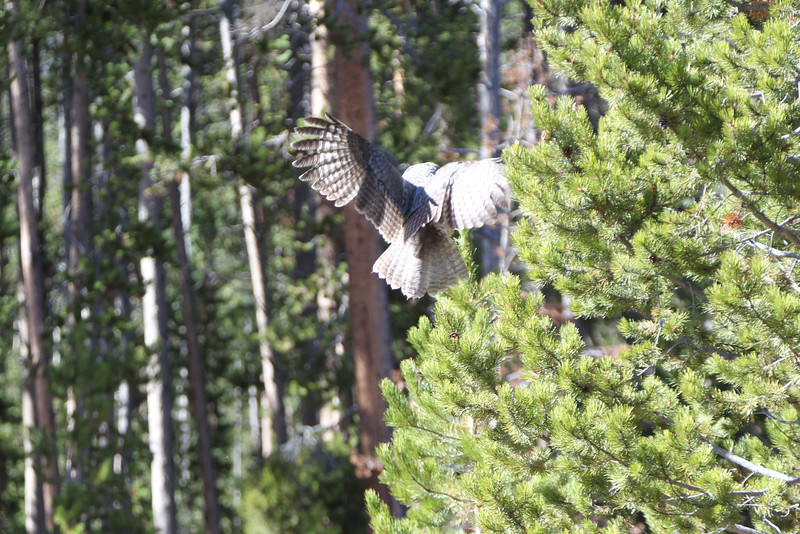 Fall Trip Wyoming & Montana 2016 (86 of 193).jpg