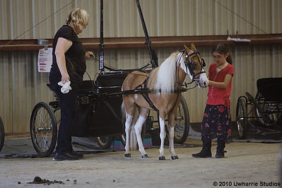 East Coast Miniature Horse Performance Classic