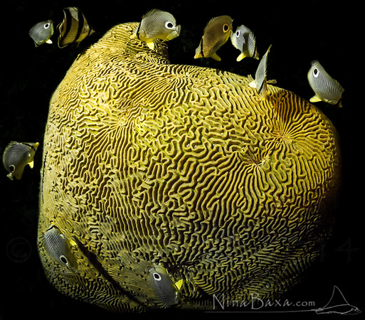 Corals&Sponges
