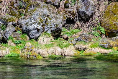 Big Springs, Headwaters of Henry's Fork of the Snake River, Idaho