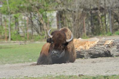 2012 March Bronx Zoo