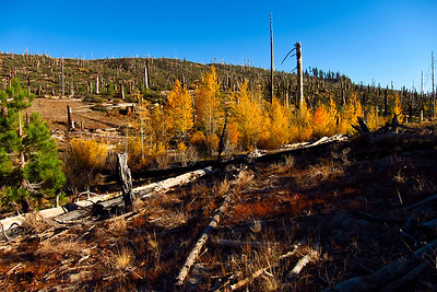 Eastern Sierra Fall 2012