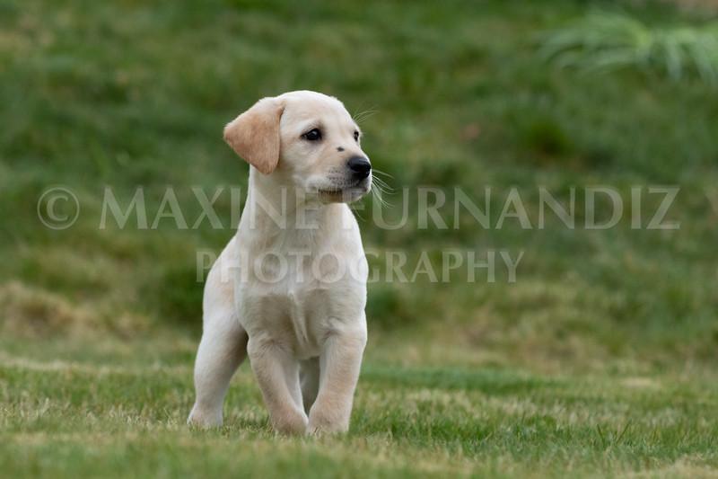 Weika Puppies 24 March 2019-6706.jpg