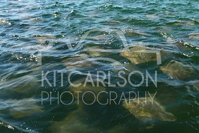Florida - Anclote Key, Honeymoon Island