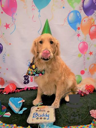 Buddy's 2nd Birthday!
