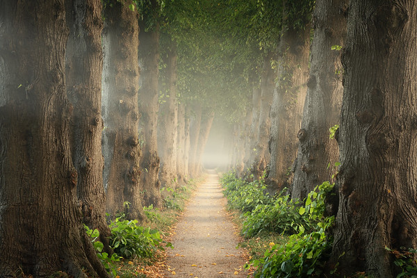 Old path