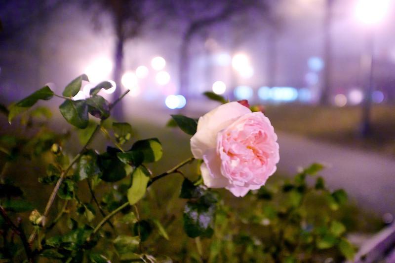 night-winter-flower