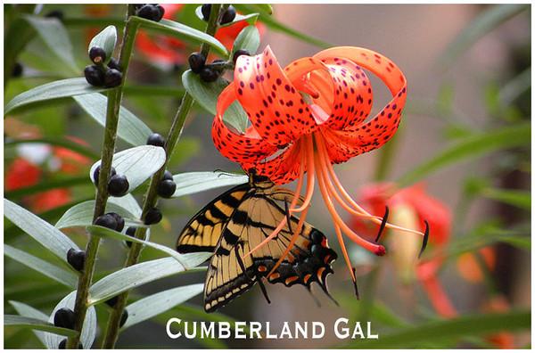 CG Butterfly.jpg