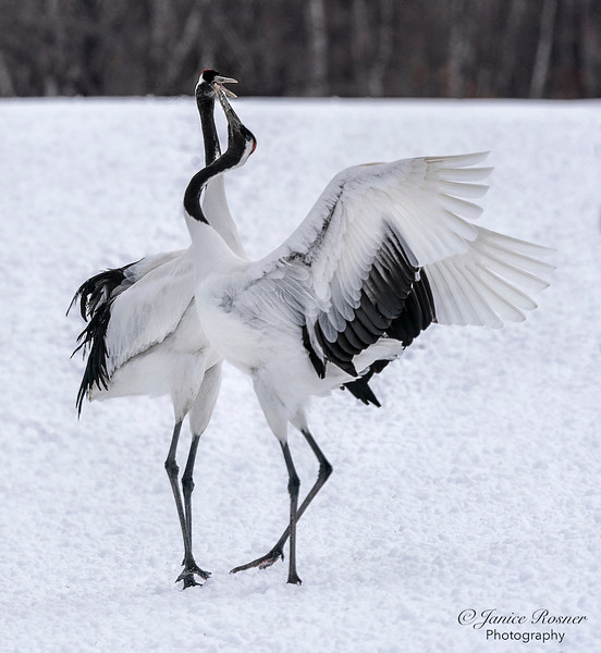 Crane Love
