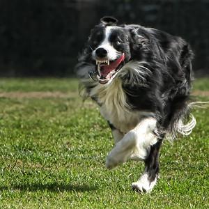 02-08-11 Survivor Dogs