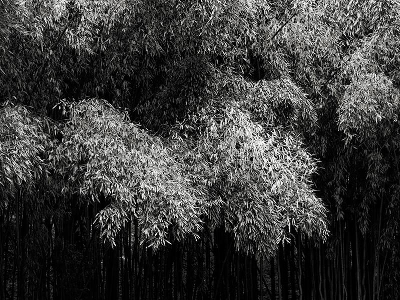 bamboo-03.jpg