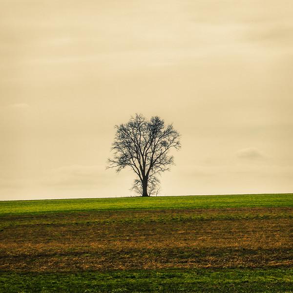 minimal tree sq crop_4500x4500-.jpg