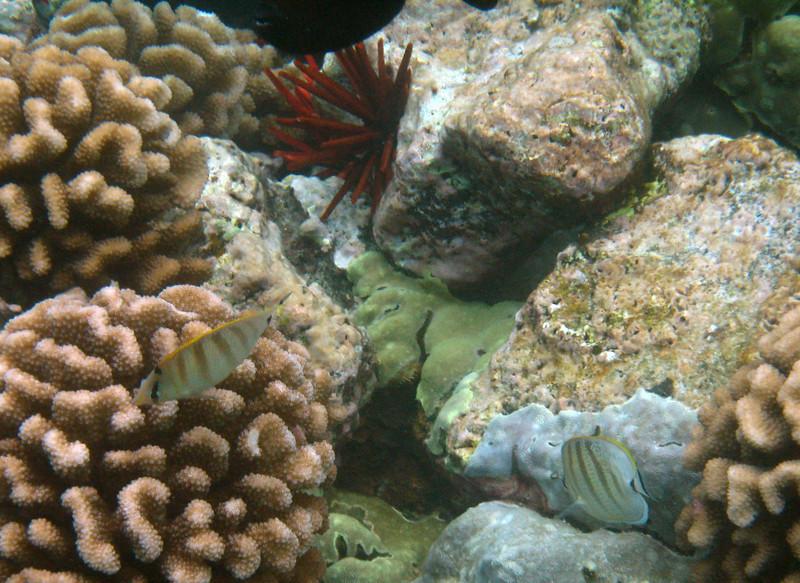491- 20080416- Hawaii 20-Snorkelling IMG_0718.jpg