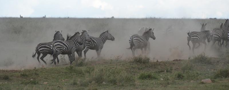 East Africa Safari 272.jpg