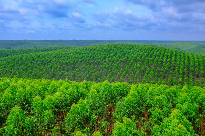 Plantation Panorama