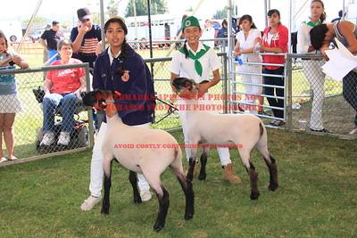2011 LHVCF Sheep