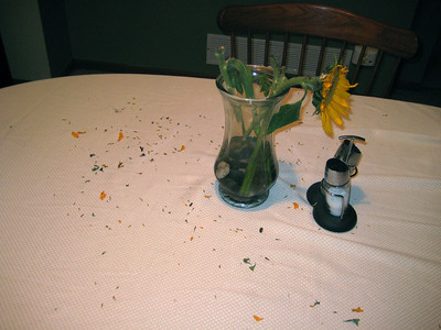 2009-1-21 Paco Destroys Sunflowers