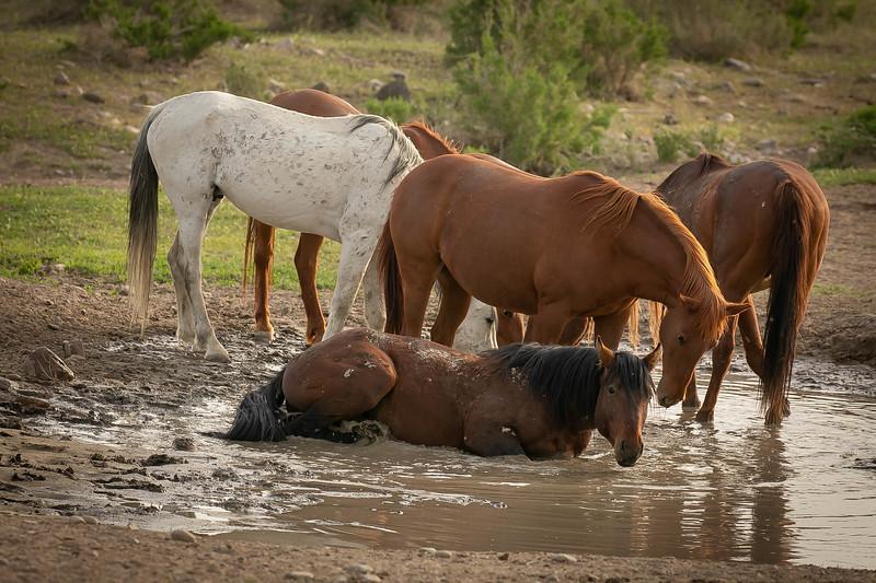 Bathing  horse.jpg