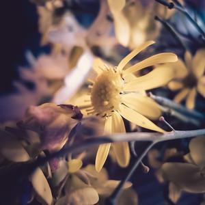 Strassenrand Blumen