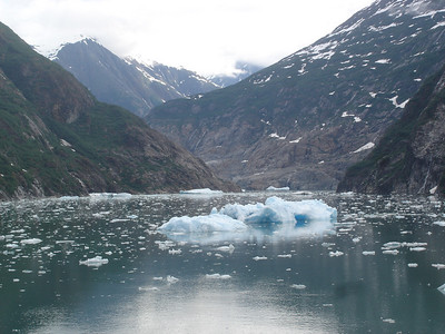 Day 7 - Tracy Arm/Juneau