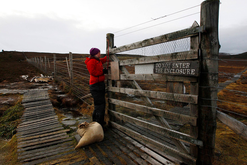 . Reindeer herder Anna Jemmett from the Glenmore Reindeer Centre opens a gate to feed a herd of free ranging reindeer in the Cairngorm Mountains near Aviemore, Scotland December 28, 2012. The 150 strong Cairngorm Reindeer Herd is Britain\'s only herd of reindeer. REUTERS/David Moir