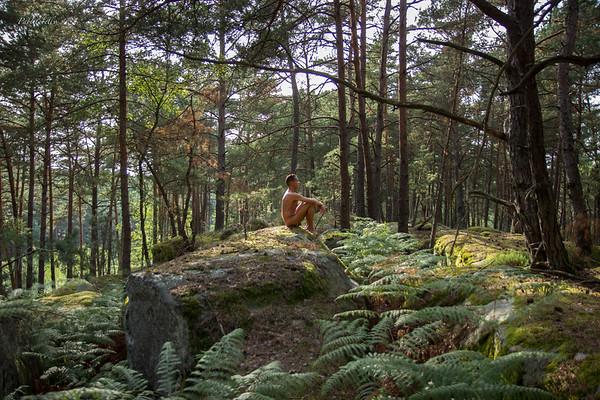 2017-08-28 à la forêt de Fontainebleau - partie I