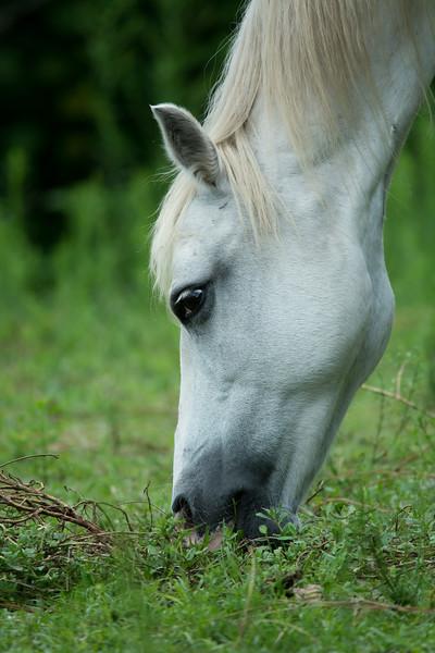 Horses_-210.JPG