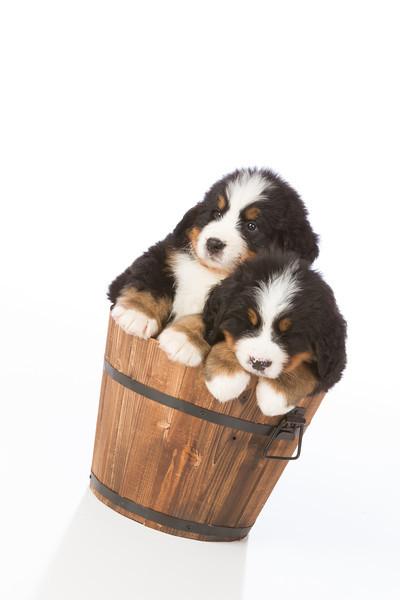 2013-Pearson Pups-Jun02-0453.jpg