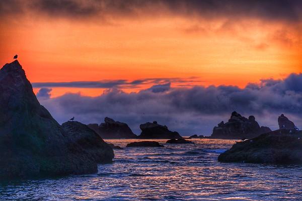 Oregon Coast August 2015